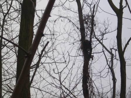 compressa-probabile-rifugio-scoiattolo-100_5821