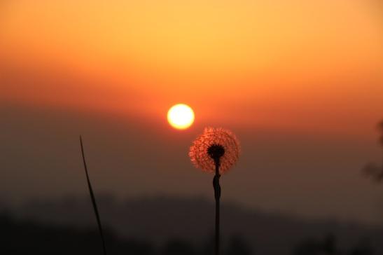 B3_56_flora_Roberto Meroni_La scalata al tramonto_Lissolo-Perego