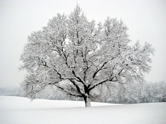 D3_66_flora_La magia bianca_Casatenovo_5