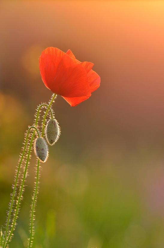 1_14_flora_Per innalzarti mio sole mi senti_Parco del Curone