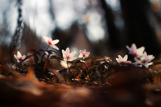 3_flora_once.jpg